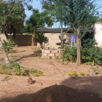 le_jardin_pousse_et_nous_voulons_a_planter.jpg